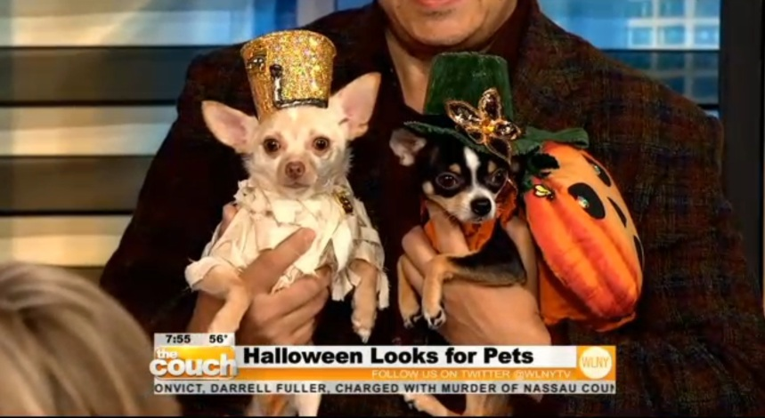 Anthony Rubio on CBS Live From The Couch Halloween Dogs 3