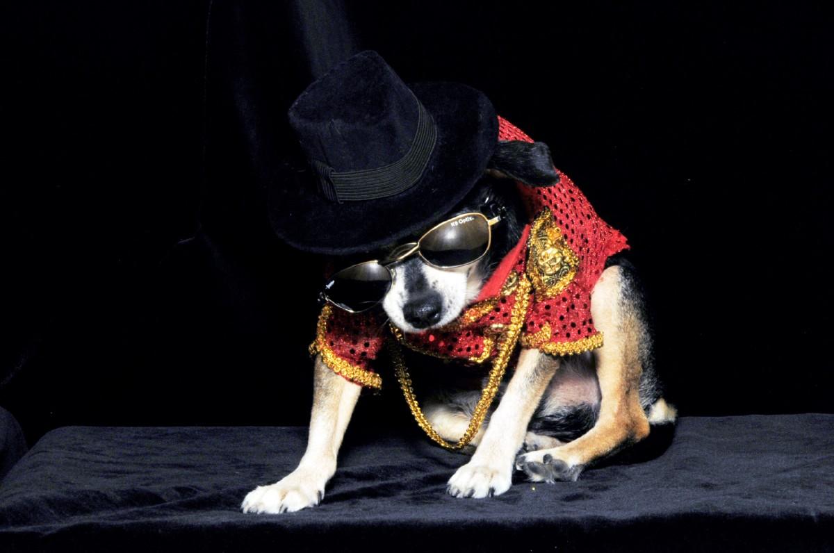 Michael Jackson S Dog