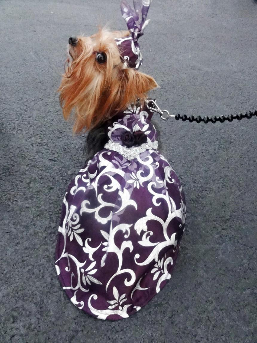 Anthony Rubio's Lady Purple Dress