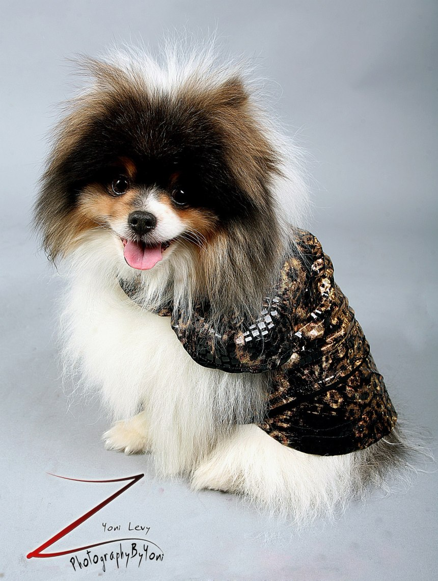 Pet Fashion for Anthony Rubio Designs