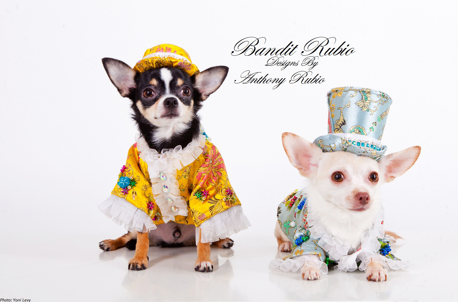 Bogie and Kimba wearing their Chinoiserie outfits by Anthony Rubio