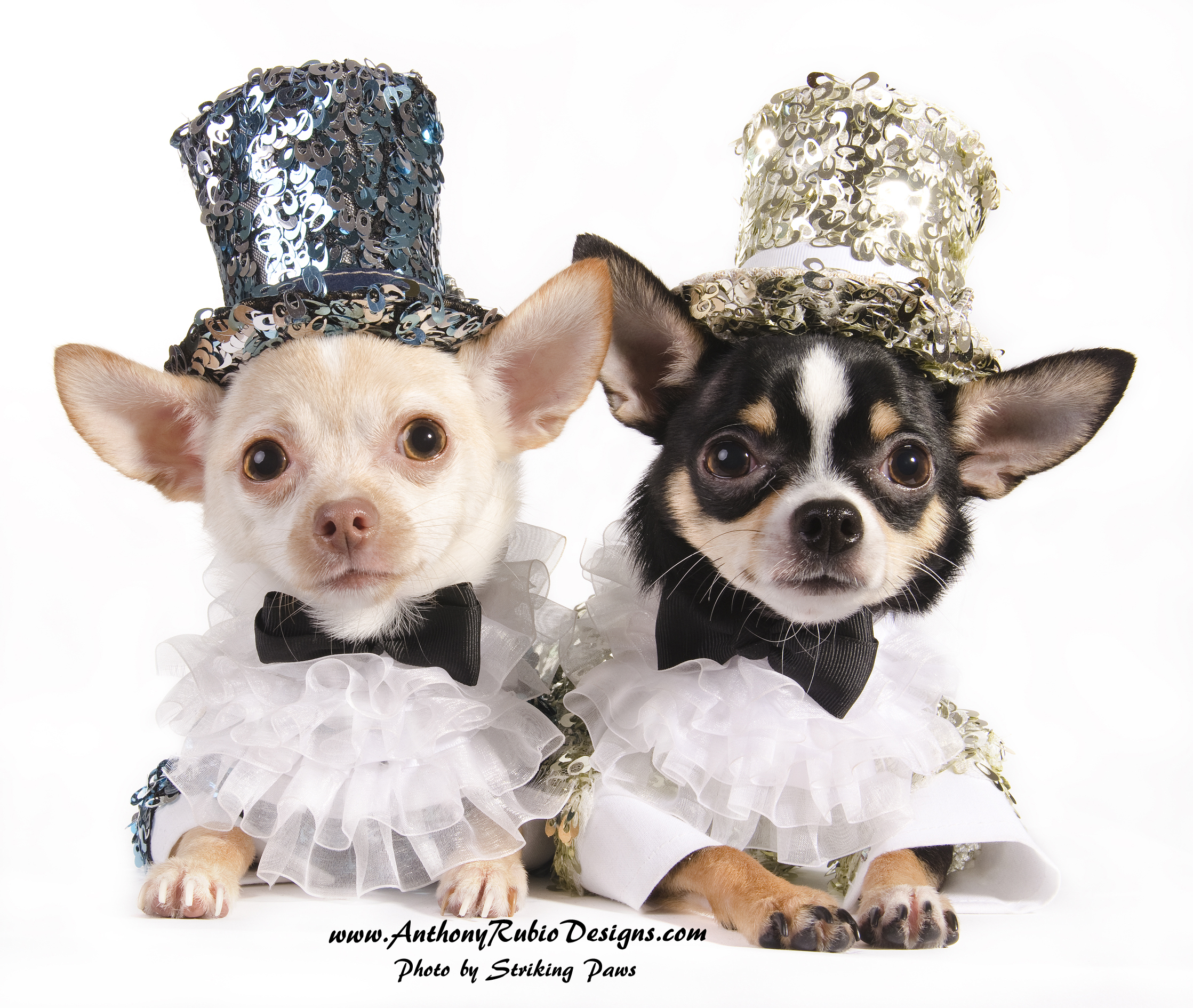Bogie and Kimba wearing their Puttin' On The Ritz outfits by Anthony Rubio