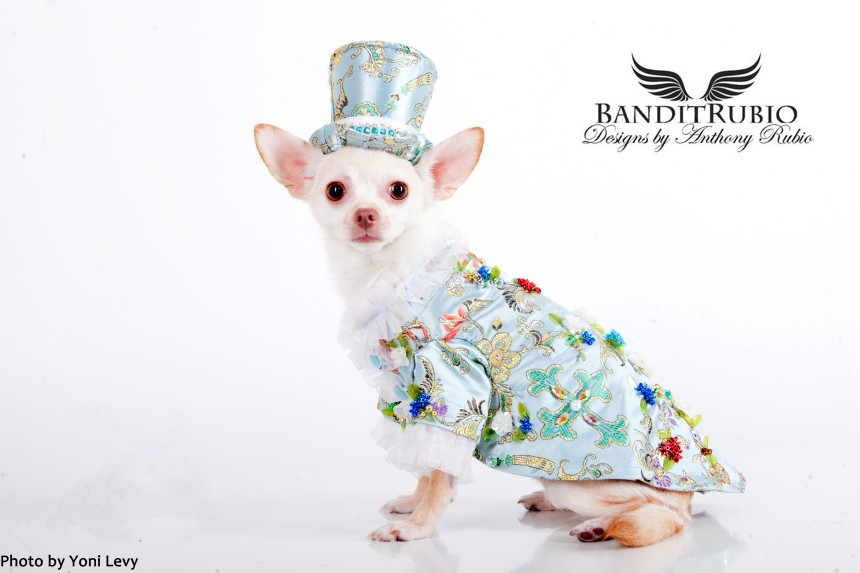 Kimba wearing his Chinoiserie outfit by Anthony Rubio
