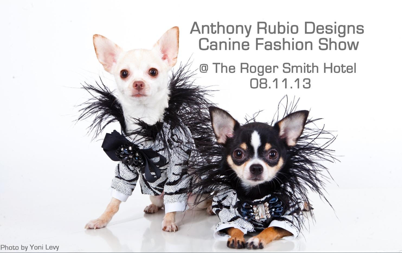 Anthony Rubio Canine Fashion show NEW
