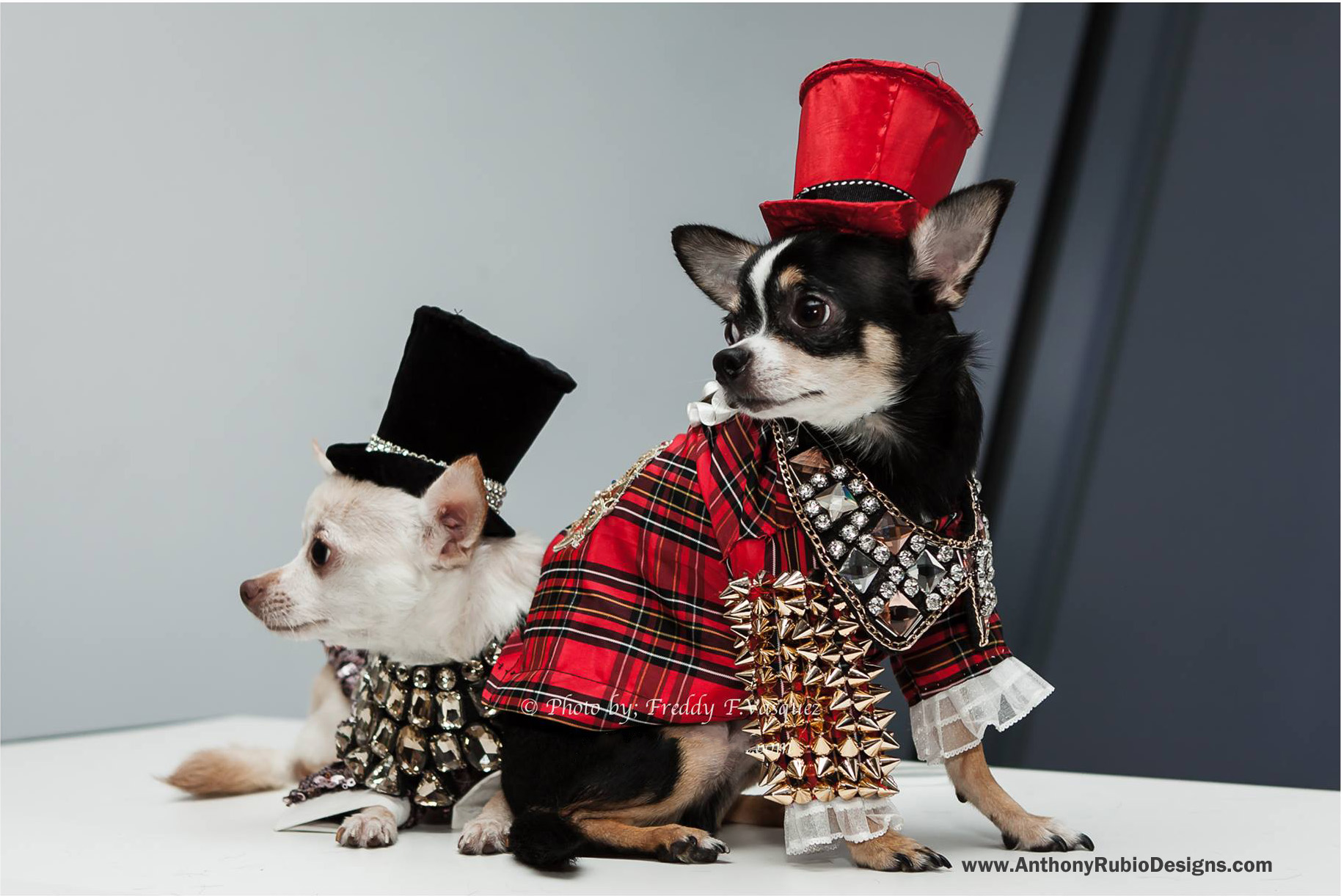 Bogie and Kimba wearing Anthony Rubio Designs (Photo by Freddy F. Vasquez)
