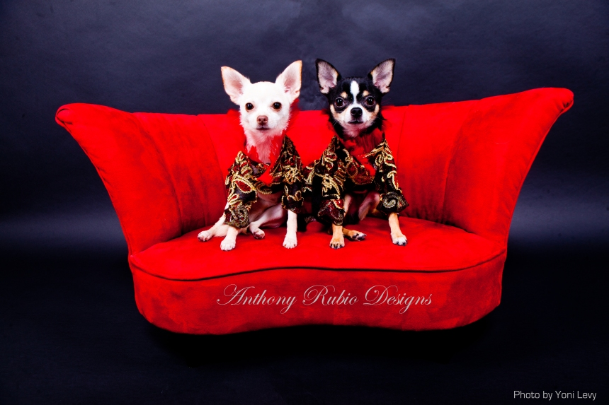 Bogie and Kimba wearing Anthony Rubio Designs