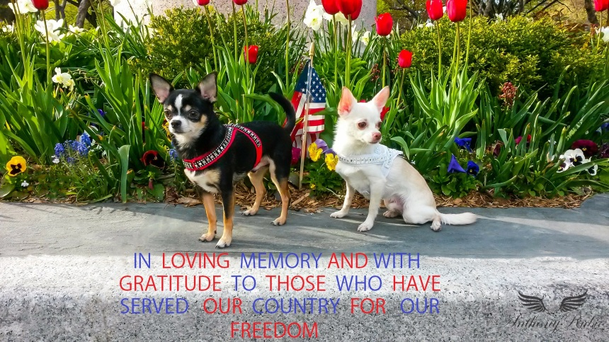 BOGIE AND KIMBA MEMORIAL DAY