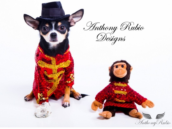 Chihuahua Bogie as Michael Jackson by Anthony Rubio Designs