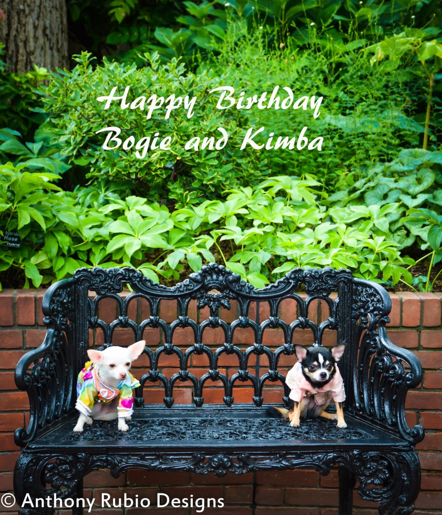 Bogie and Kimba's Happy Birthday Card (Anthony Rubio Designs)