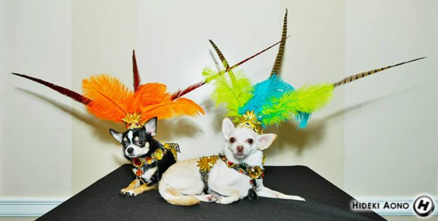 Chihuahuas Bogie and Kimba in their Aztec Halloween Costumes by Anthony Rubio