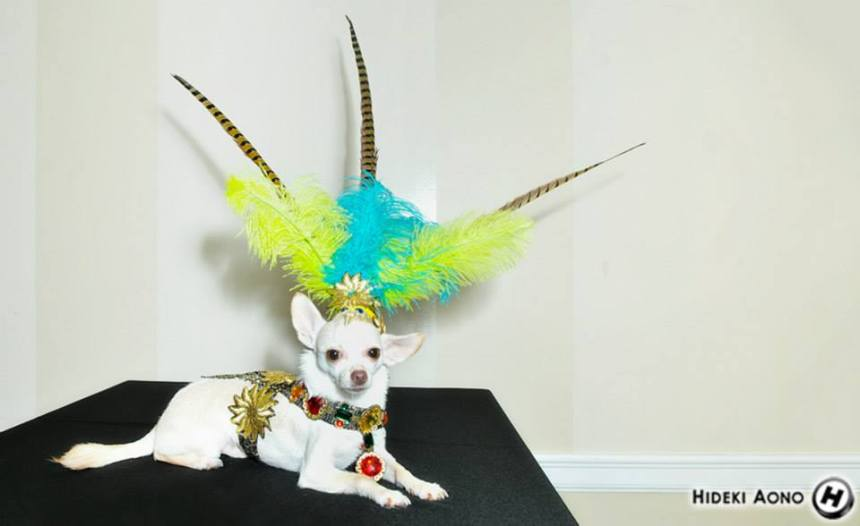 Chihuahua Kimba in his Aztec Halloween Costumes by Anthony Rubio Designs
