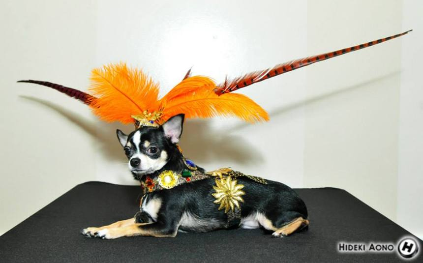 Chihuahua Bogie in his Aztec Halloween Costumes by Anthony Rubio Designs