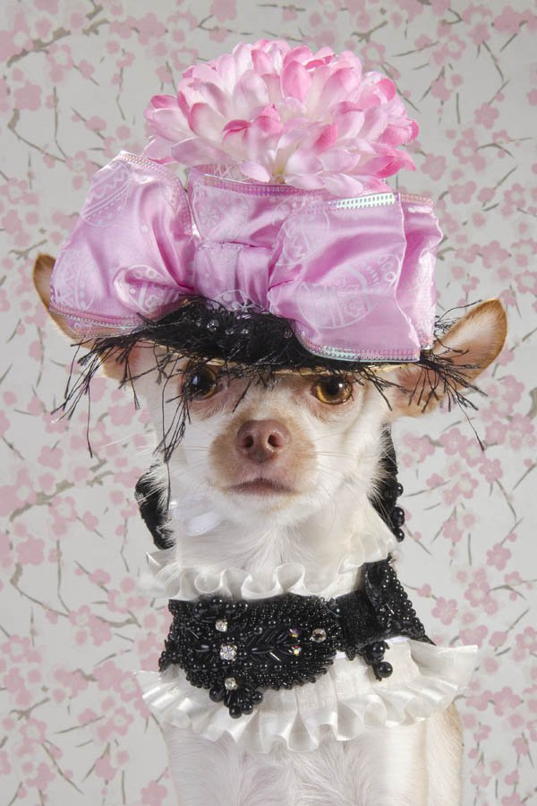Anthony Rubio created couture canine fashion for Dog-Vogue photo series.