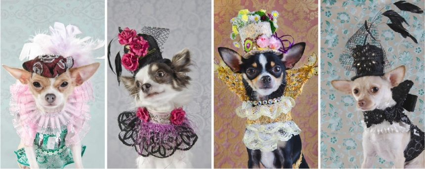 Anthony Rubio Dog Fashion