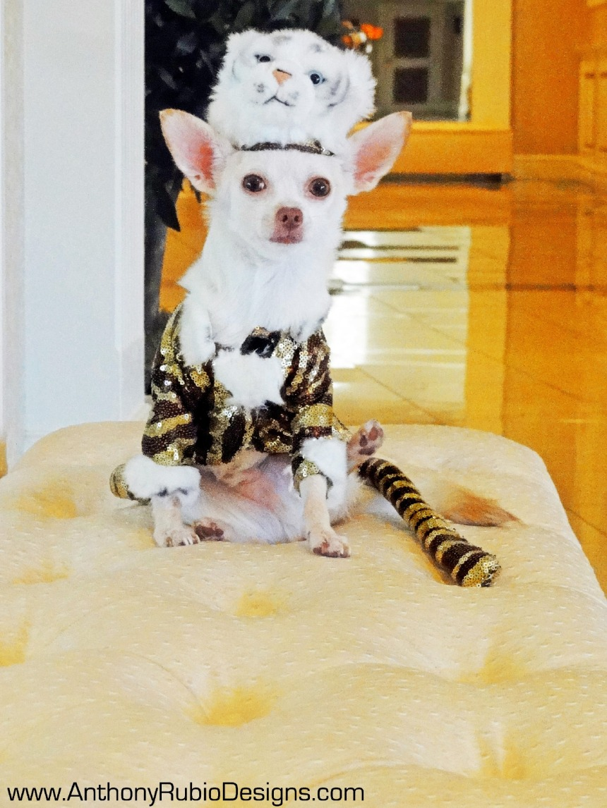 Canine Halloween Tiger Costume by Anthony Rubio Designs
