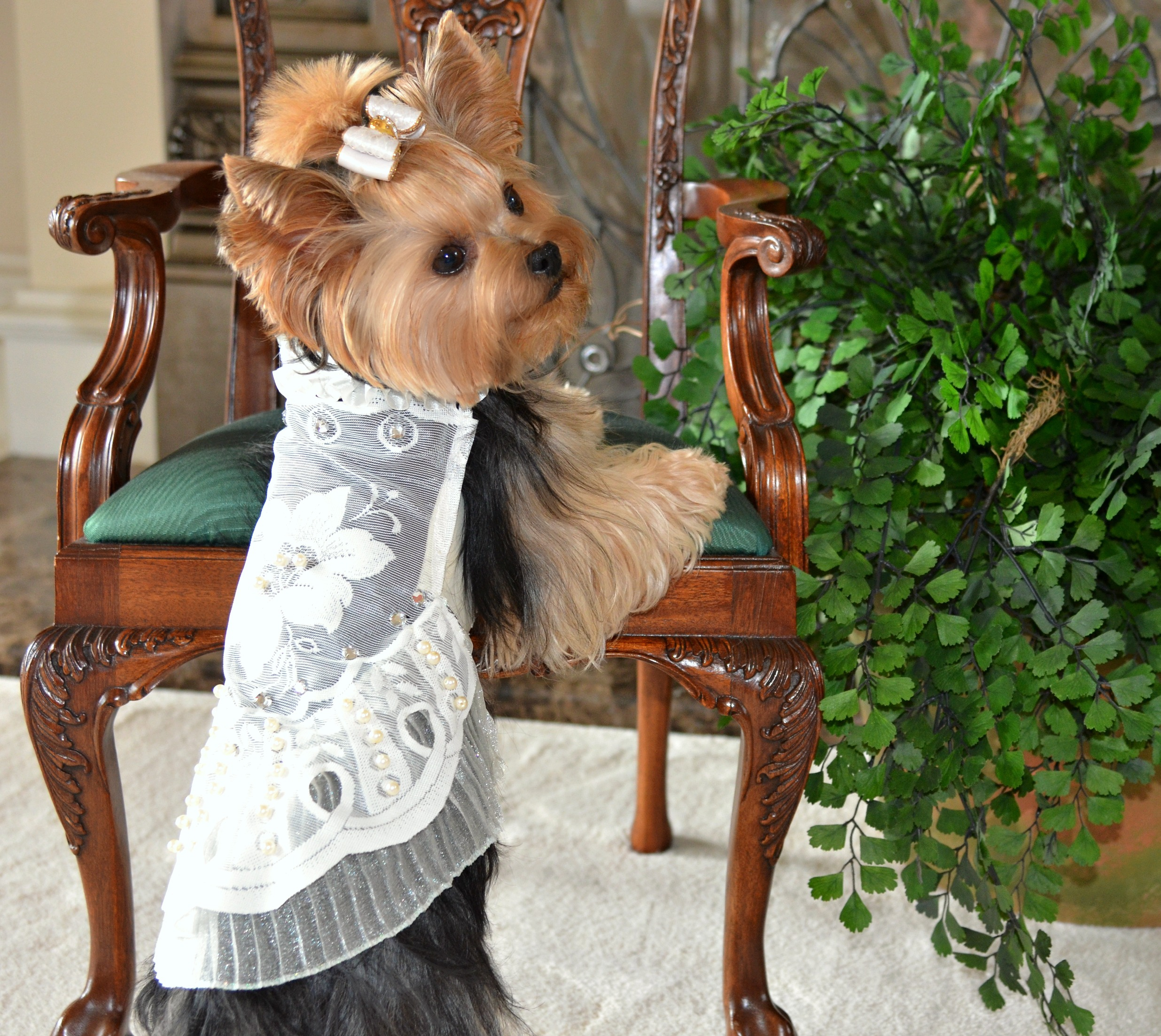 Yorkie Millie LaRue wearing Gatsby inspired dress by Anthony Rubio Designs