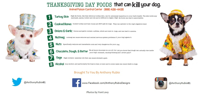 Anthony Rubio's Tips For A Safe Thanksgiving For Your Dog