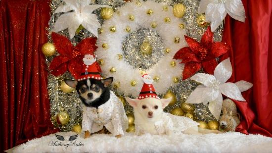 Dog Christmas Cookies