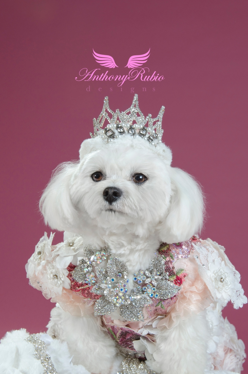 Best Dressed Dog Award winner Maltese Bella Mia's Crown Jewels  Creation by Anthony Rubio (Photo By StrikingPaws)