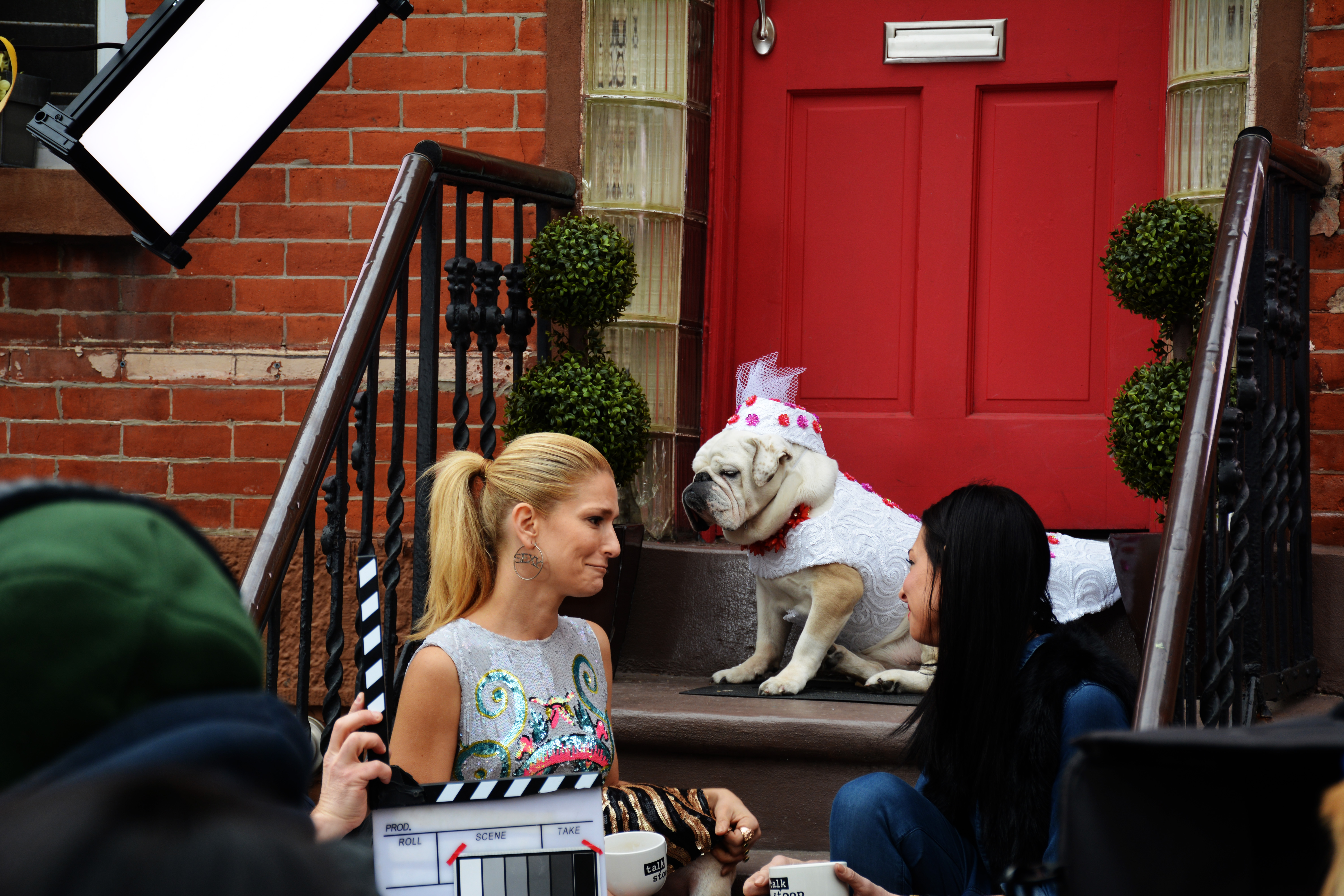 On the set of Talk Stoop with host Cat Grennleaf and guest Stacy London. Bulldog Gracie wearing Dog Fashion by Anthony Rubio Designs.