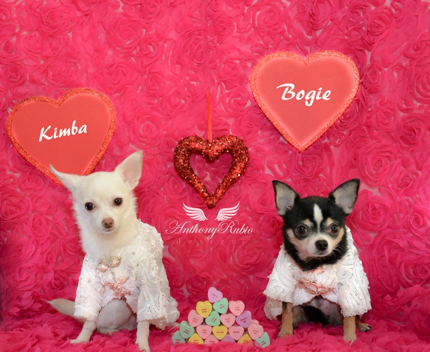 Bogie and Kimba's Valentine's card wearing Dog Fashion by Anthony Rubio