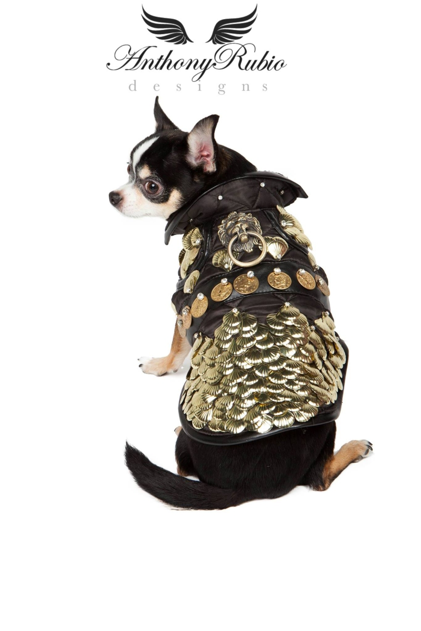 Dog Fashion by Pet Couturier Anthony Rubio. Model is Chihuahua Bogie.