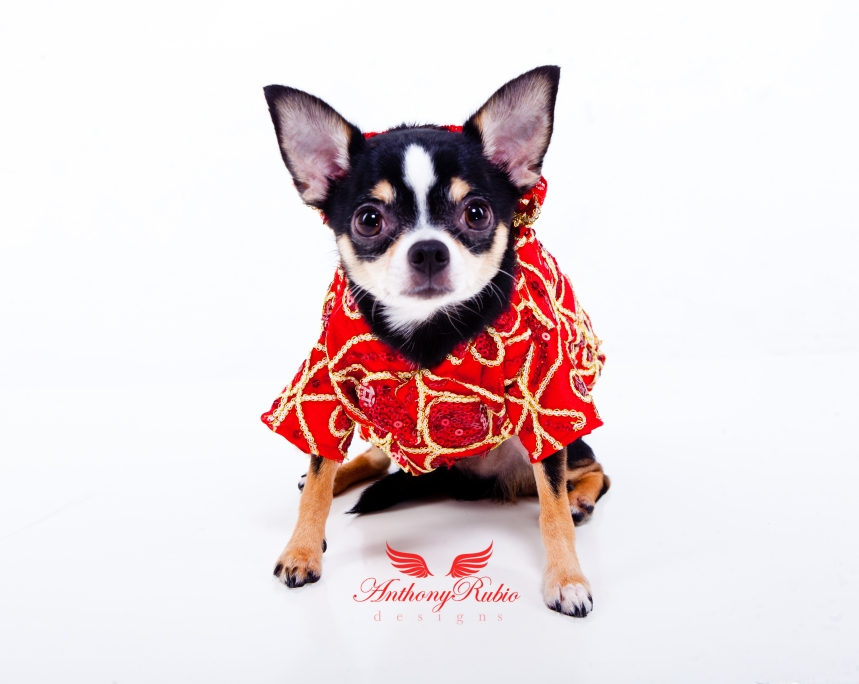 Dog Fashion by Pet Couturier Anthony Rubio. Canine Couture.