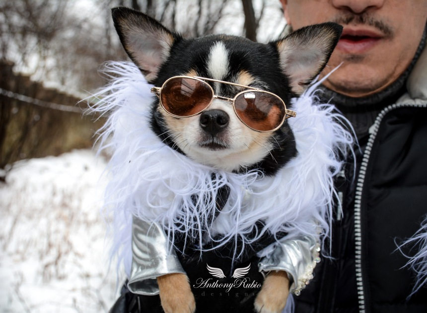 Chihuahua Bogie is wearing Nordic inspired Faux Fur trimmed coat created by Anthony Rubio. Dog Fashion.