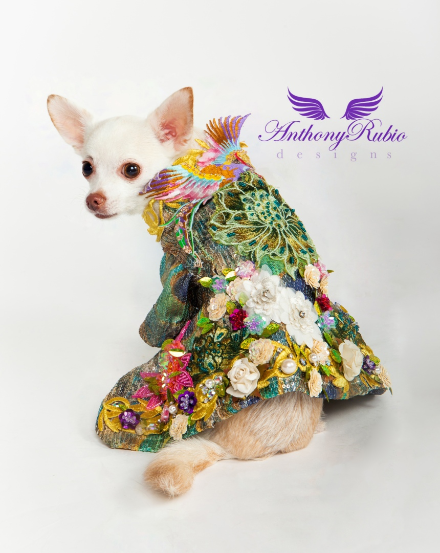 "Dog Fashion ""What Dreams May Come"" by Anthony Rubio"