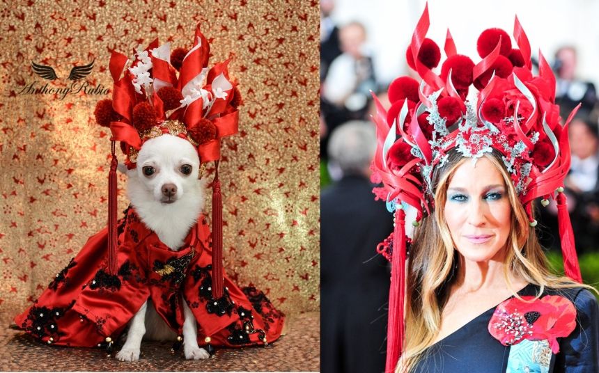 Sarah Jessica Parker's Met Gala head piece re-created for Chihuahua Kimba by Anthony Rubio