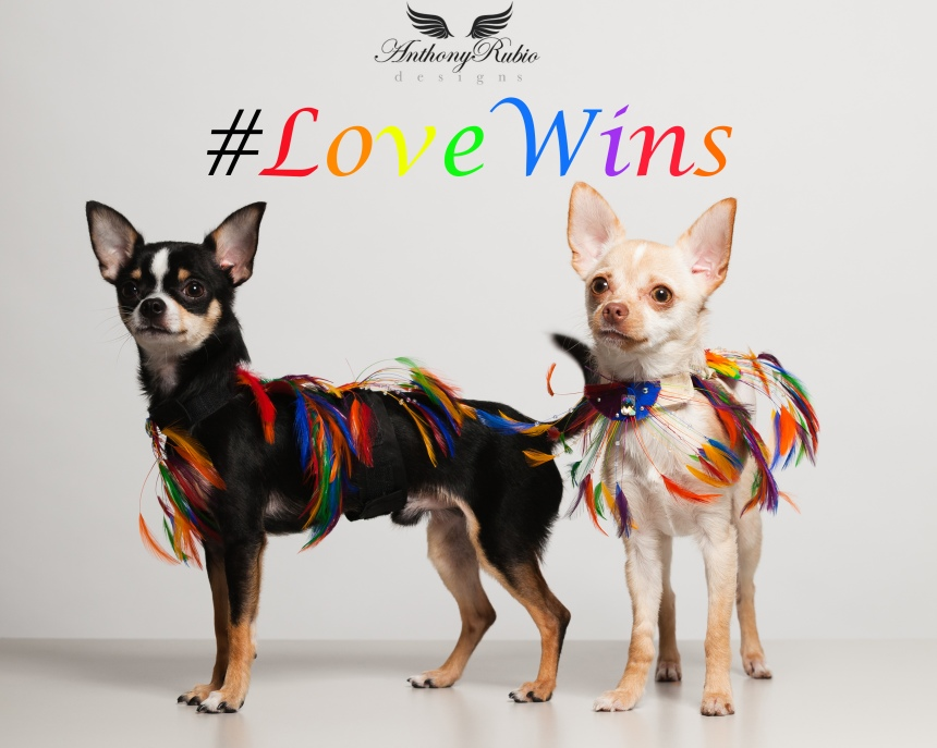Today #LoveWins in America