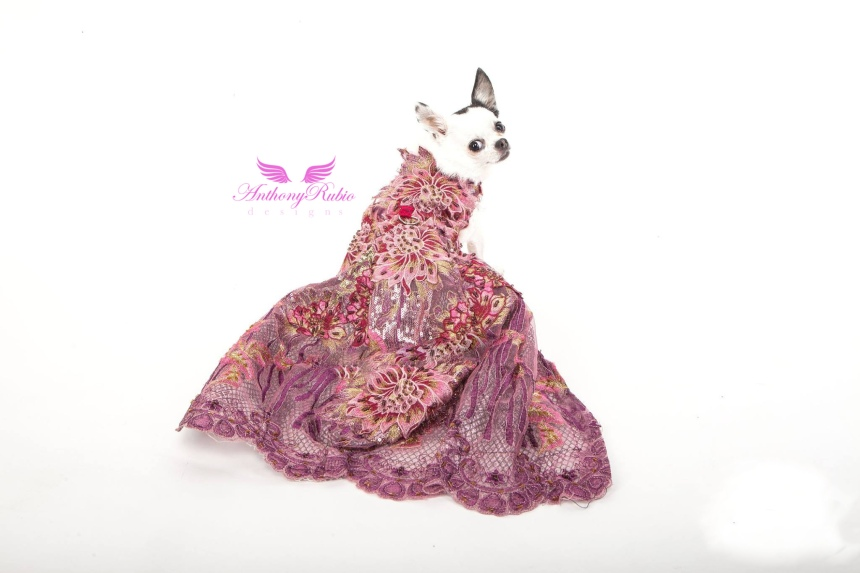 Chihuahua wearing Foral Ball Gown by Anthony Rubio