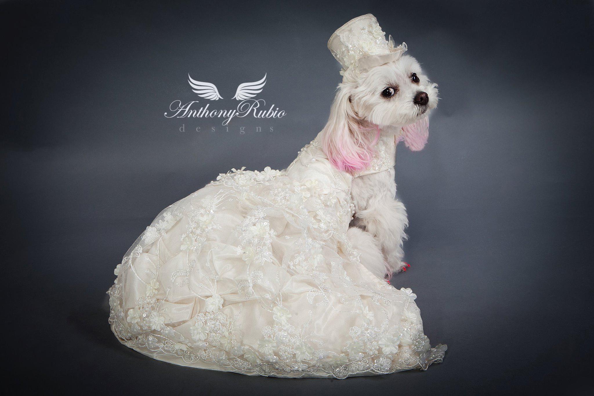 Doggies Dress.for a Formal Wedding