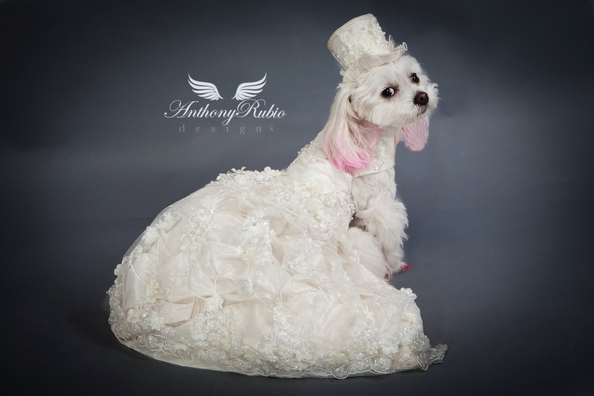 A Wedding Gown for dogs by Anthony Rubio