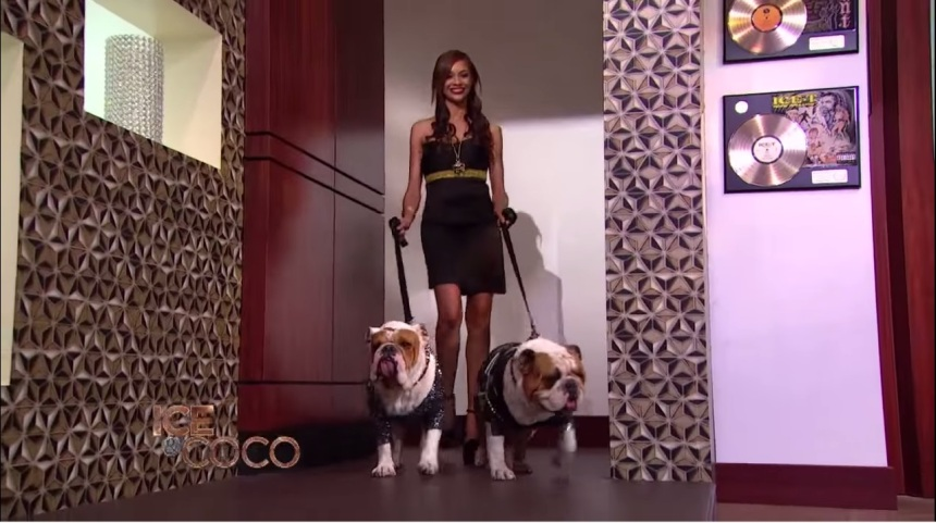 Designer Anthony Rubio with Ice-T and Coco on the set of Ice And Coco talk show on Fox Model Luz Morillo with Bulldogs Maximus And Spartacus wearing Anthony Rubio Designs