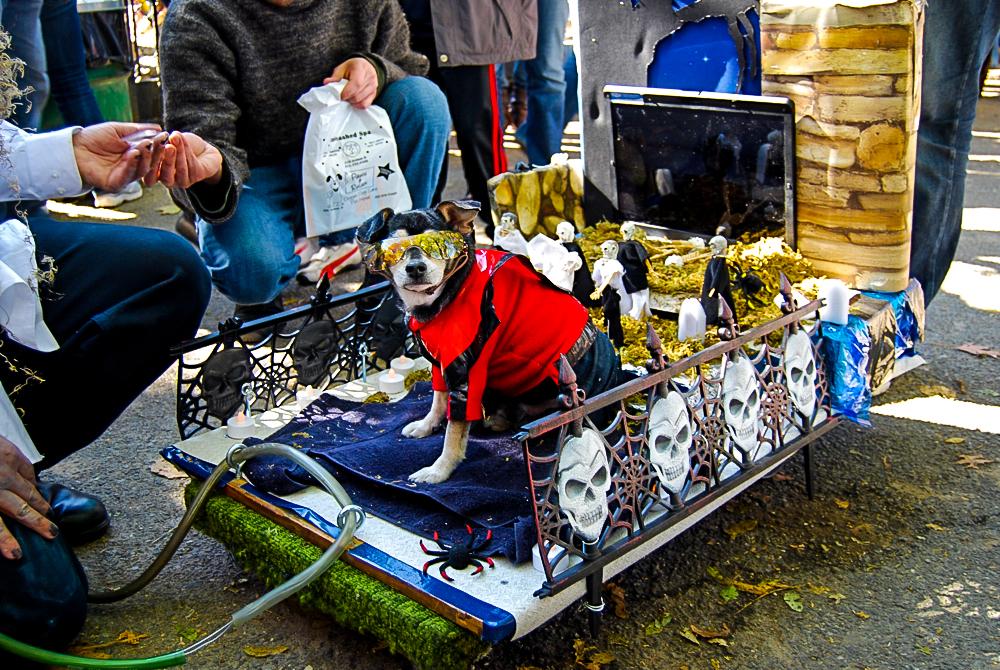 Tompkins Square Park Dog Parade  Winner