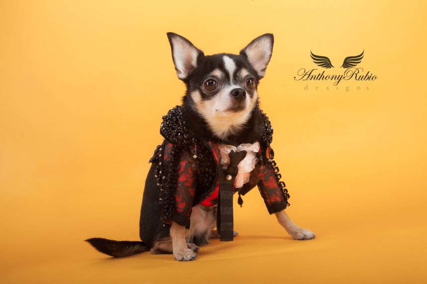 Pet Couturier Anthony Rubio created Matador costumes for dogs. Part of his Trajes De Luces series