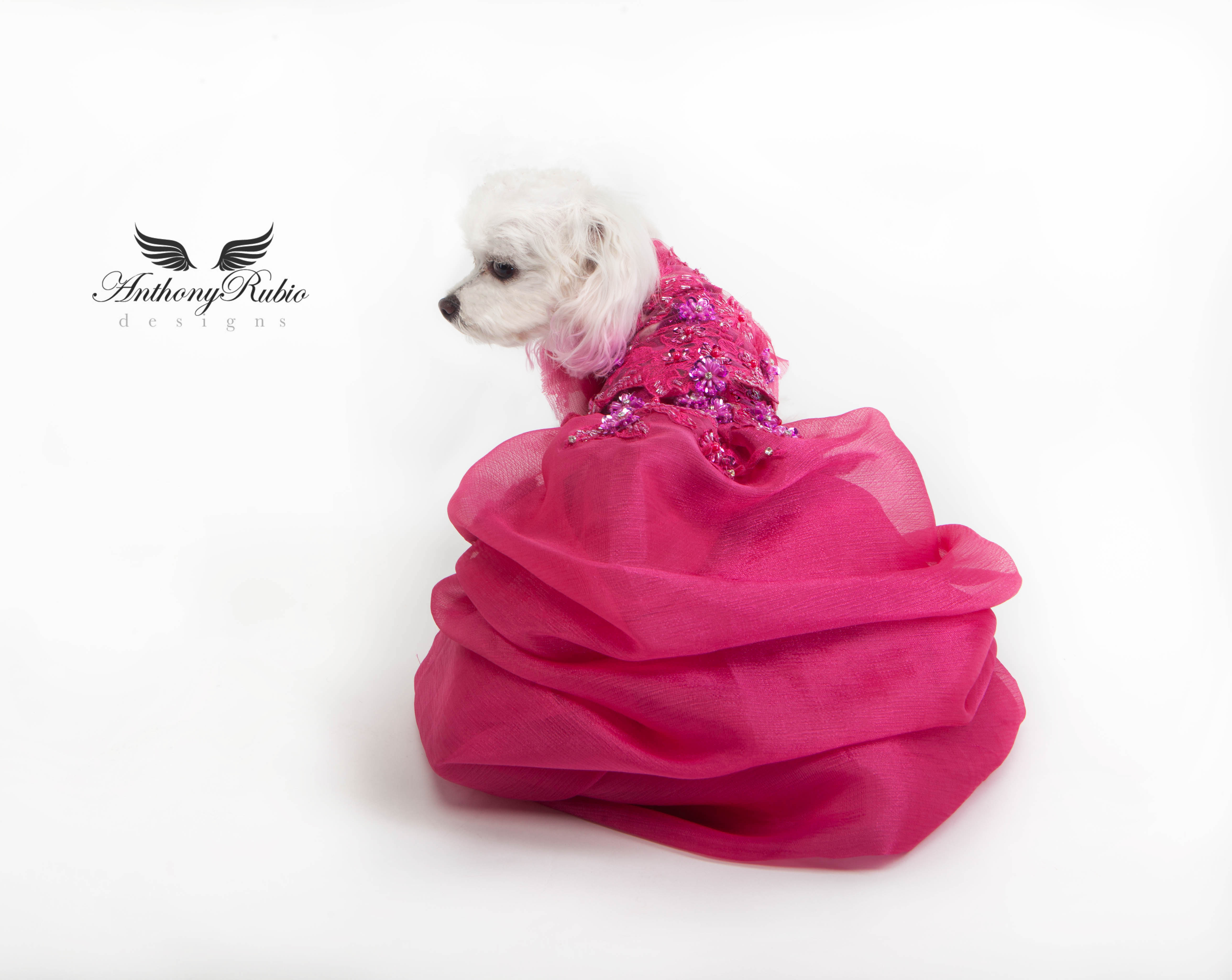 Fuchsia gown for dogs by Anthony Rubio