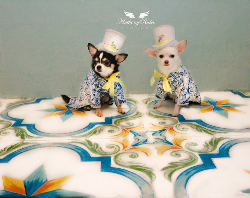 Blue Majolica tuxedos and Top Hats for dogs by Anthony Rubio