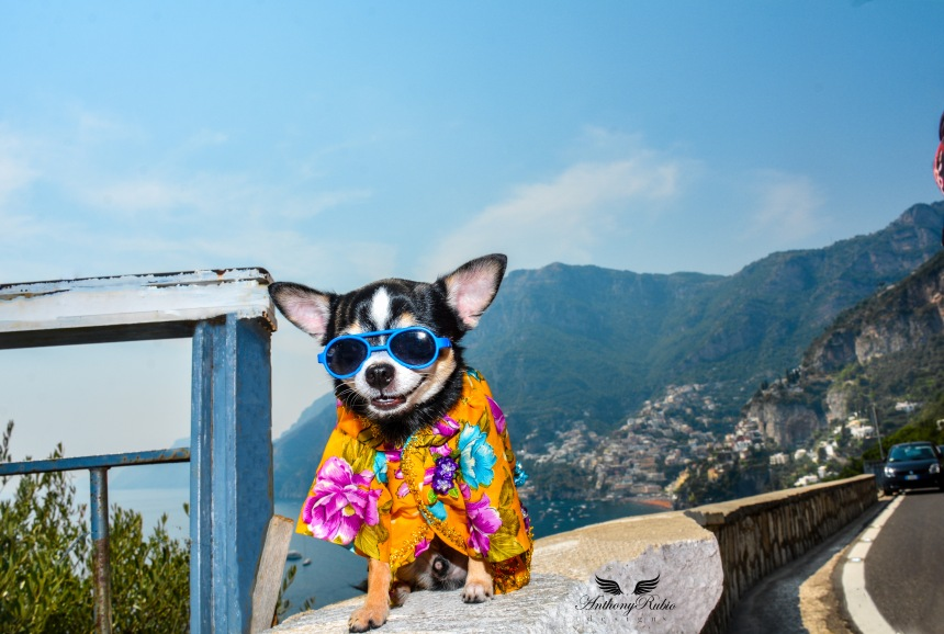 Chihuahua Bogie is wearing a Floral print shirt by Anthony Rubio. Photo taken in Italy.