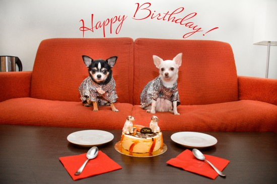Anthony Rubio, Bogie and Kimba, Happy Birthday, Chihuahua,