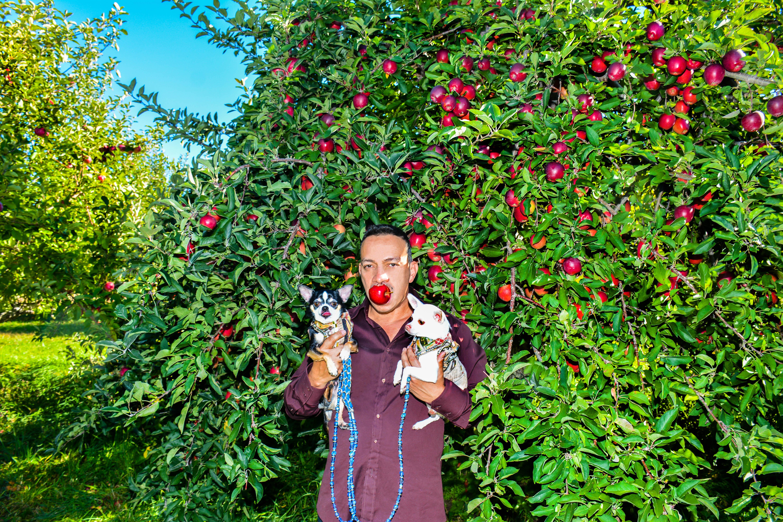 Anthony Rubio with Bogie and Kimba go Apple Picking