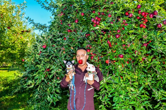 Anthony Rubio with Bogie and Kimba go Apple Picking