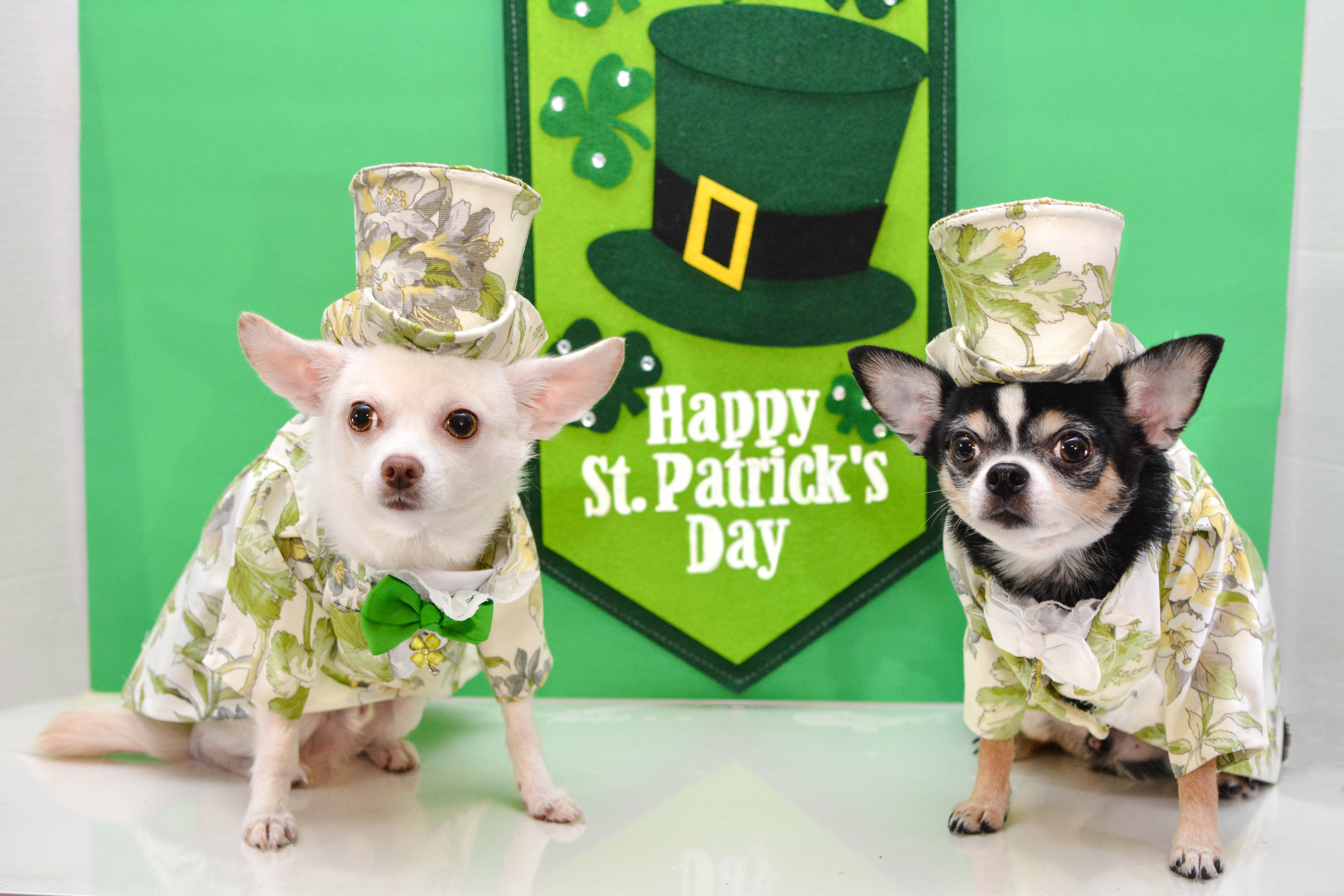 Happy St Patrick's Day! from Anthony Rubio