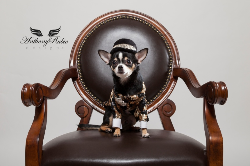 When Your Dog is The Boss. Canine Couture by Anthony Rubio