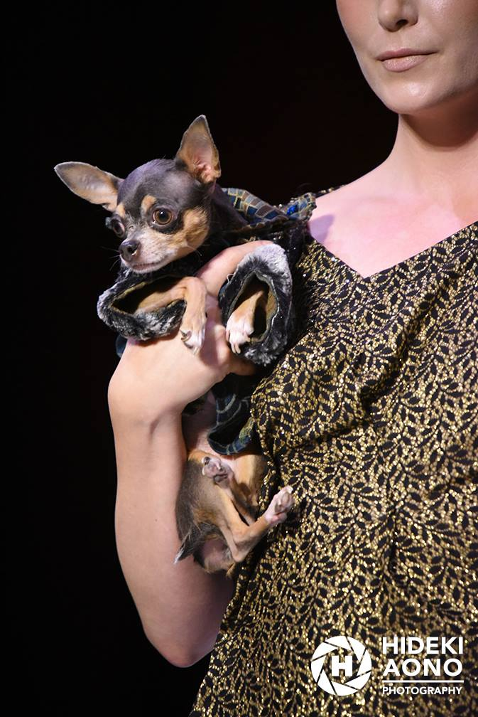 Anthony Rubio Fall/Winter 2016 - New York Fashion Week Women's Wear & Canine Couture Canine Model: Juliet, @Chihuahua_Juliet Photo by: Hideki Aono