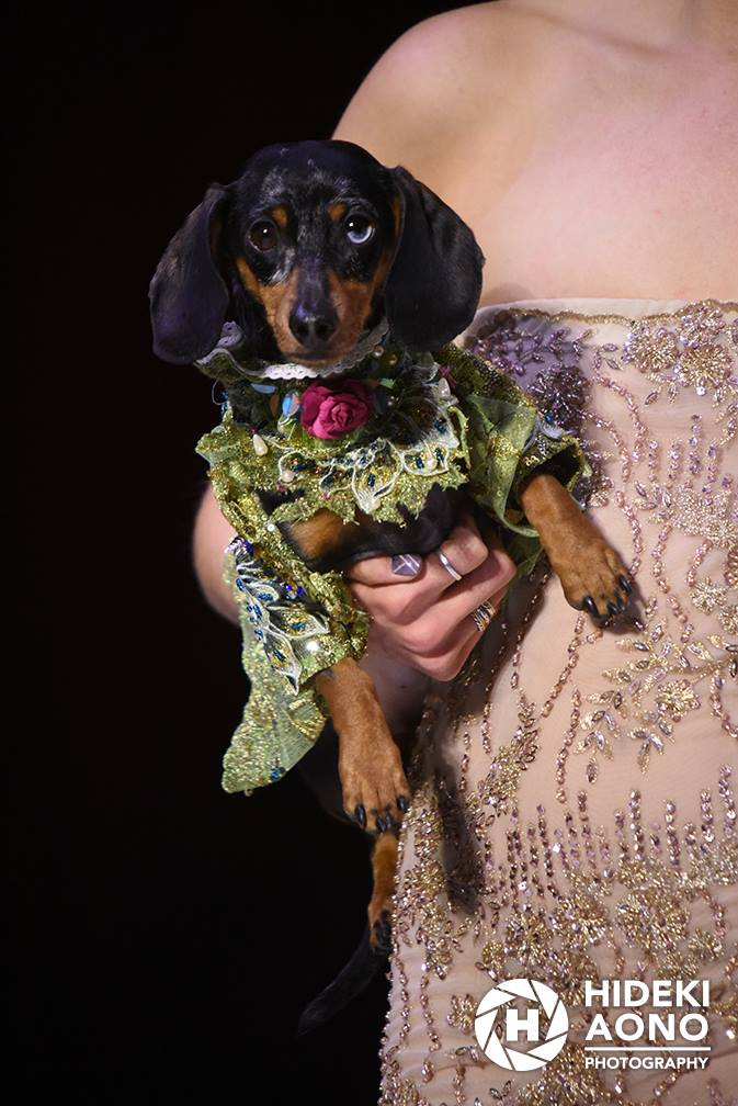Anthony Rubio Fall/Winter 2016 - New York Fashion Week Women's Wear & Canine Couture Female Model: Ariana Canine Model: Dex Photo by: Hideki Aono