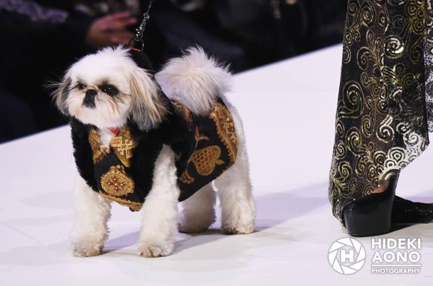 Anthony Rubio Fall/Winter 2016 - New York Fashion Week Women's Wear & Canine Couture Female Model: Luybava Che Canine Model: Marshall, MarshmallowPup09 Photo by: Hideki Aono