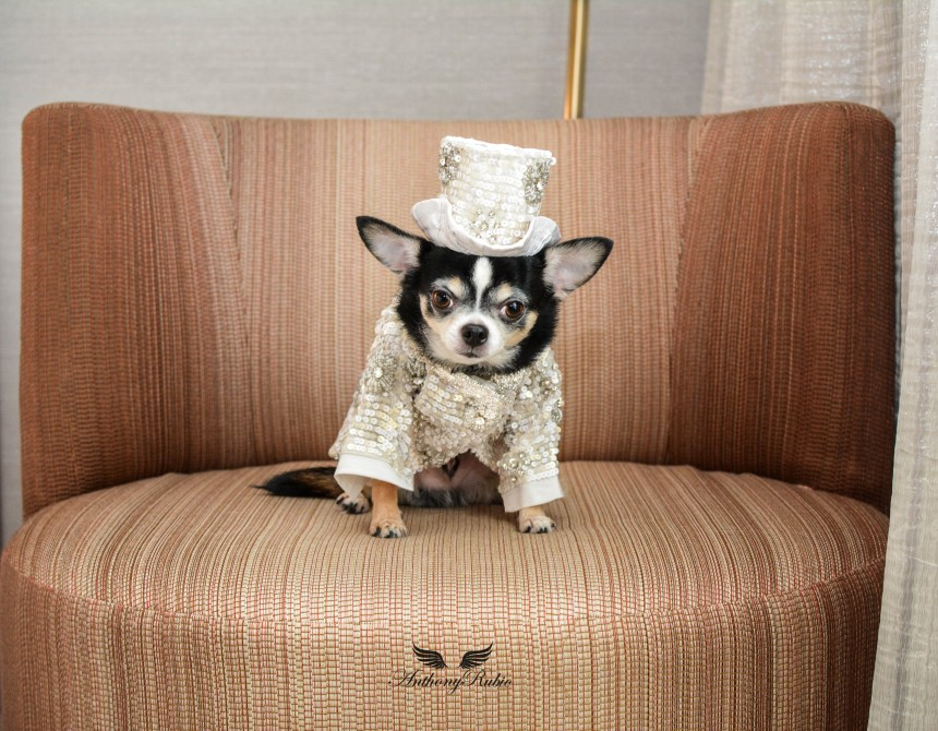 Full Sequin and Crystals Suit for Dogs by Anthony Rubio