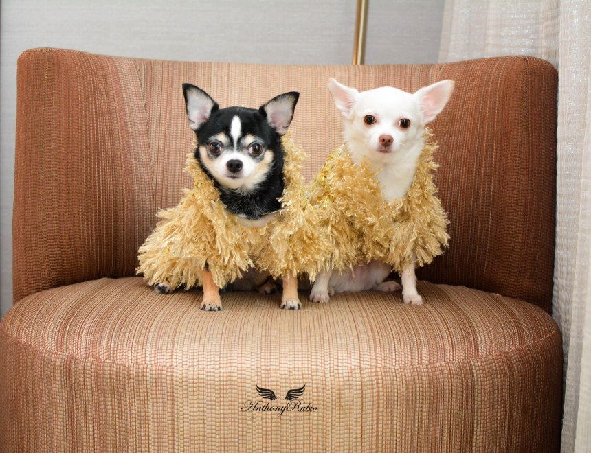 Fall/Winter Coats for Dogs by Anthony Rubio